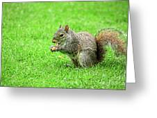 Lunchtime In The Park Greeting Card