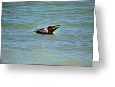 Lunchtime Pelican  Greeting Card