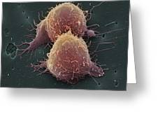 Lung Cancer Cell Division Greeting Card