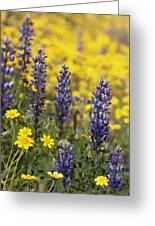Lupin And Daisies Greeting Card