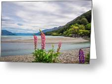 Lupin Flowers In Alpine Scenery At Kinloch, Nz. Greeting Card