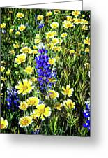 Lupine Amidst Tidy Tips Greeting Card