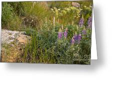 Lupine Among The Weeds  Greeting Card
