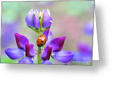 Lupine And Friends Greeting Card