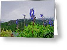 Lupine And Mountains Greeting Card