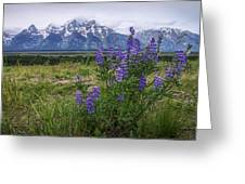 Lupine Beauty Greeting Card