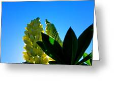Lupine Camelot-1 Greeting Card