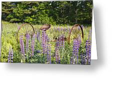 Lupine Festival - Sugar Hill New Hampshire Usa Greeting Card