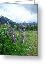 Lupine In The Alpine Greeting Card