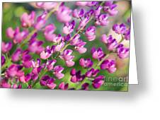 Lupine Greeting Card