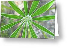 Lupine Leaf And Raindrop Greeting Card