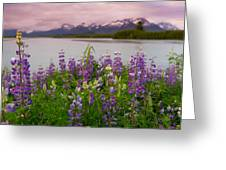 Lupine Of The Copper River Delta Greeting Card