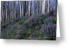 Lupine On Mt. Washburn - Yellowstone Greeting Card