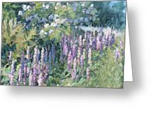 Lupine On Parade Greeting Card by L Diane Johnson