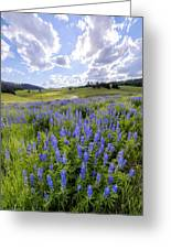 Lupine Pass Greeting Card