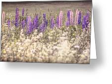 Lupine Remembered Greeting Card