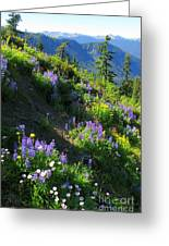 Lupine Slopes Greeting Card