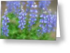 Lupine Soft Focus Greeting Card