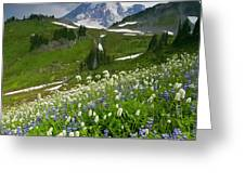 Lupine Storm Greeting Card