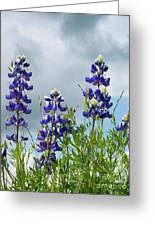 Lupines Against The Sky Greeting Card