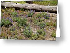 Lupines And A Log Greeting Card