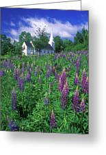 Lupines And Church Sugar Hill Greeting Card