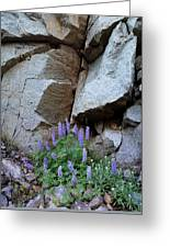 Lupines And Rock Face Greeting Card