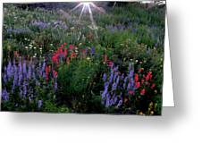 Lupines And Sun Greeting Card
