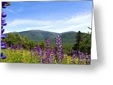 Lupines And The Presidentials Greeting Card