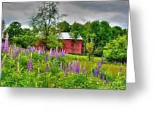 Lupines And The Red Barn Greeting Card