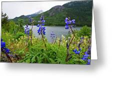 Lupines And Water Greeting Card