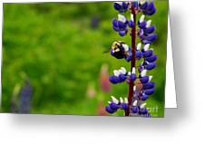 Lupins 2016 7 Greeting Card