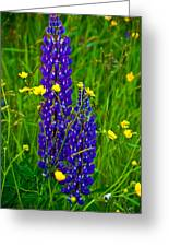 Lupins And Buttercups Greeting Card
