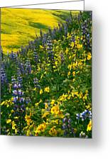 Lupins And Daisys Greeting Card