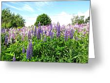 Lupins And Flocks Greeting Card