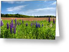 Lupins In A Field Greeting Card by Matt Dobson