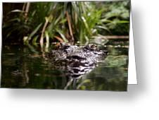 Lurking Crocodile Greeting Card