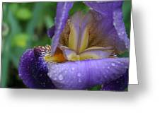 Luscious Blooming Iris Greeting Card