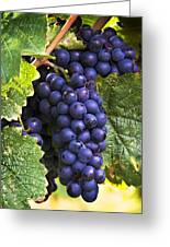 Luscious Grape Cluster Greeting Card