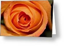 Luscious Rose Greeting Card