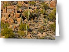 Lush Arizona Desert Landscape Greeting Card