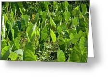 Lush Crop Leaves In A Field Greeting Card