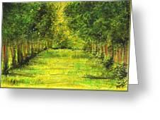 Tropical Trees Theosophical Society Chennai Greeting Card
