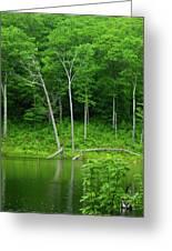 Lush Green Pond Greeting Card