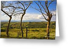 Lush Land Leafless Trees I Greeting Card