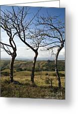 Lush Land Leafless Trees Iv Greeting Card