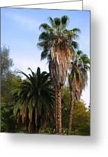 Lush Palms Greeting Card