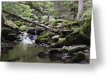 Lush Stream And Canopy Foliage Greeting Card