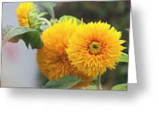 Lush Sunflowers Greeting Card