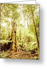 Lush Tasmanian Forestry Greeting Card